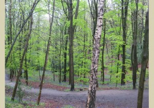 Consider, woodlands antebellum swinger does