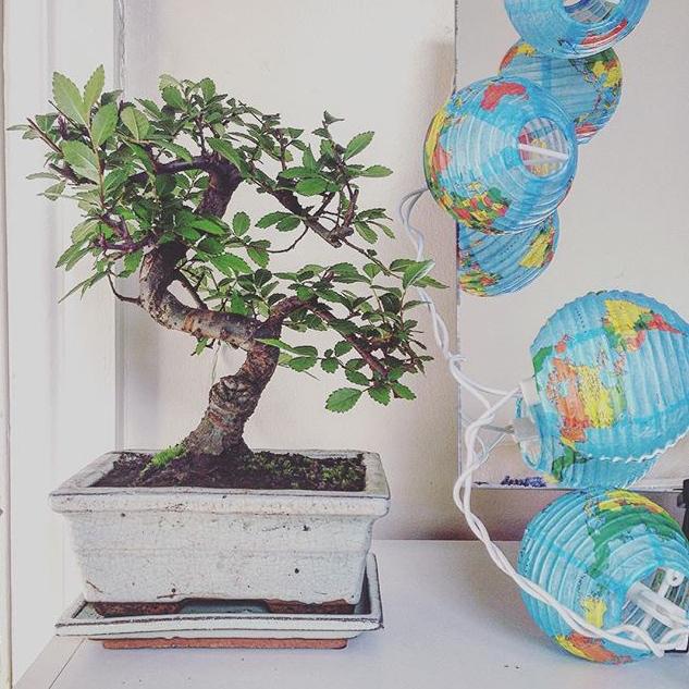bonsai_2769