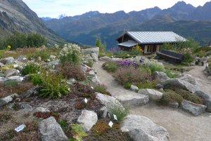 AlpineGarden