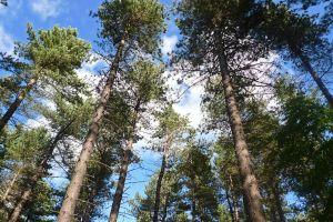 ChopwellTrees