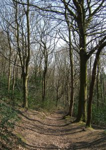 Great High Wood