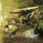 Raintonwood stream2