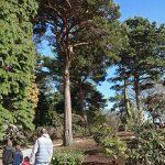 EdinburghSequoiaApproach