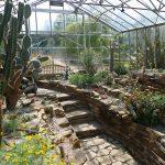 BotanicalCacti