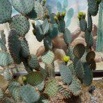 BotanicalCacti3