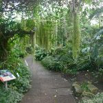 EdinBotanicsJungle