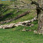 StudleyTwistyTrees