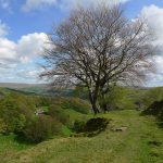 CalderValleyWalkTree