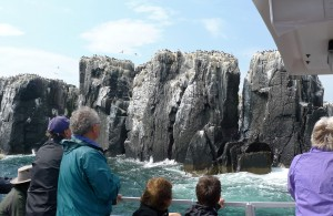 Farne Islands from boat