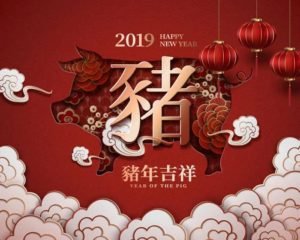 Chinese new year pig