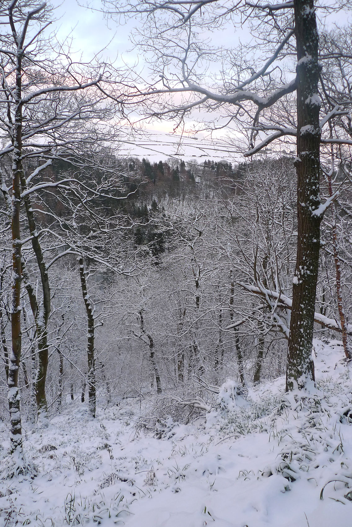 HebdenBridgeSnowyTrees
