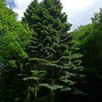 ChevinTrees