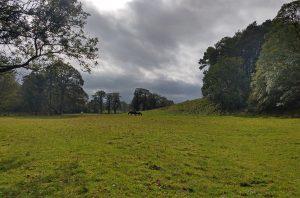 Meadows near Hoff Beck